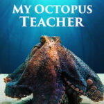 My Octopus Teacher on Netflix
